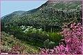 منظره بهاری زیبا از دره آشان مراغه - panoramio (5).jpg