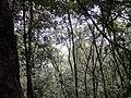 """咸宁""""一级保护""""之原生态孝子山山林 - panoramio.jpg"""