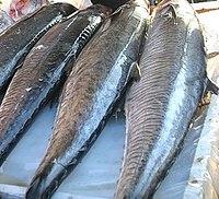 𩵚魠魚 (Scomberomorus commerson),澎湖