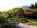小笠原觀景台 Ogasawara Viewing Platform - panoramio (2).jpg