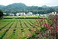 广州最美乡村—红山村 - panoramio (15).jpg