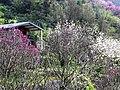 楓樹湖 Fengshuhu - panoramio (3).jpg