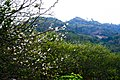 流溪香雪Scenery in GhuangZhou, China - panoramio (8).jpg