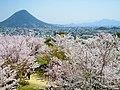 満開の桜と讃岐富士 (The view of spring from Marugame Castle) 10 Apr, 2011 - panoramio.jpg
