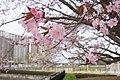 研究学園駅公園からマンション - panoramio.jpg