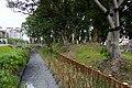 麪包樹林 Breadfruit Trees - panoramio.jpg