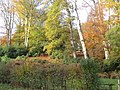 -2019-11-10 Trees in Autumn, Overstrand, Norfolk (2).JPG
