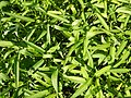 0251jfPanoramics Pulilan Fields Plants Philippinesfvf 22.JPG