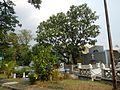 0540jfCaloocan City Rizal La Loma Cemetery Landmarksfvf 79.JPG