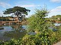 09424jfPaddy fields trees irrigation canals Farm to Market Road Talampas Bustos Bulacanfvf 22.jpg
