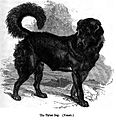 142. Thibet Dog.JPG