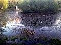 170520111785 Усадьба Расторгуева Л.И.- Харитонова, парк с прудом.jpg