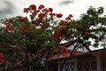 1971 - Qui Nhơn & Cây Phượng (9677370013).jpg