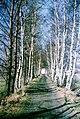 19880215070NR Hänichen (Bannewitz) Windbergbahndamm.jpg