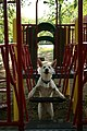 2008-06-28 White GSD puppy on playground.jpg