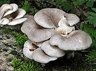 ciuperci exemple papanicolaou con resultado anormal