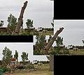 2011 Road Odyssey (5907254867).jpg