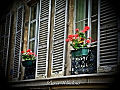 2011 windowbox Paris 6199202901.jpg