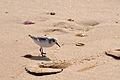 2012-01-14 14-33-36 Spain Canarias Jandía.jpg