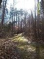 2012 First Day Hike (6615553423).jpg