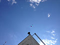 2014-08-24 15 05 13 Skydivers parachuting to the ground at Pennridge Airport in East Rockhill Township, Pennsylvania.JPG