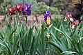 2015-365-135 The Flowery Lineup (17095293553).jpg