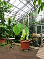 2018-06-18-bonn-meckenheimer-allee-169-botanischer-garten-victoriahaus-02.jpg