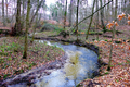 2018-12-22-December-watercolors.-Hike-to-the-Ratingen-forest. File-12.png