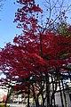 20181108 Atsubetsu 6576 (48437581737).jpg