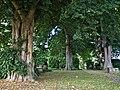 2020-07-18 Linden in Belle, NRW 03.jpg