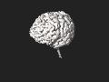 3DPX-003765 3DModel of Brain Nevit Dilmen.stl