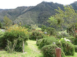 Venezuelan Andes montane forests - Sierra de La Culata, Edo. Mérida