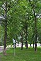 46-106-5003 Drohobych Park RB.jpg