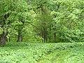 6 июня 2008 Прямухино В парке усадьбы 037.jpg