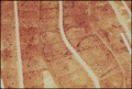 AERIAL OF CATTLE ON HUGE FEEDLOT. (FROM THE DOCUMERICA-1 EXHIBITION. FOR OTHER IMAGES IN THIS ASSIGNMENT, SEE FICHE... - NARA - 553047.tif