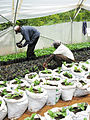 AMPATH Project, Eldoret, Kenya.jpg