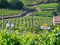 AOC Puyméras - vignoble de Faucon.jpg