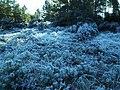 A Nice Woodland Walk - geograph.org.uk - 118389.jpg