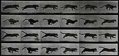 A cat running. Photogravure after Eadweard Muybridge, 1887. Wellcome V0048771.jpg