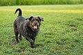 A dog - 36149840484.jpg