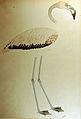 A flamingo (6124598661).jpg