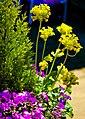 A garden near Scarborough-2 (4629066839).jpg