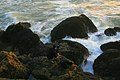A photographer between waves and mussels 7.jpg