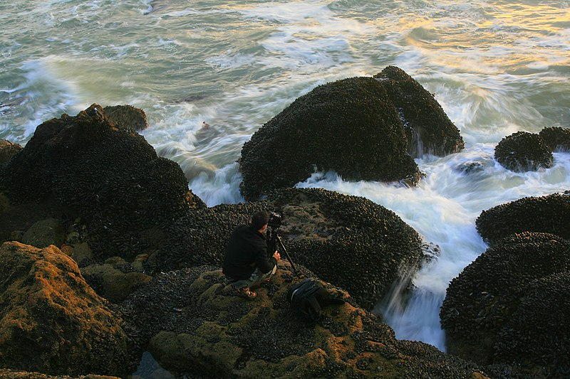 File:A photographer between waves and mussels 7.jpg