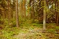 A walk in the woods (9162109840).jpg