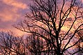 Abendrot Baeume Sonnenuntergang lila rosa Afterglow trees sunset purple pink.jpg