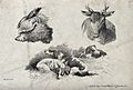 Above, a hog's head and a stag's head; below, hunting dogs r Wellcome V0020720.jpg