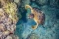 Abrolhos Marine National ParkRobertoCostaPinto15.jpg