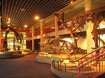 Exhibit in the Academy of Natural Sciences, 19...