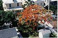 Aerial photographs of Florida MM00012270 (5984844279).jpg